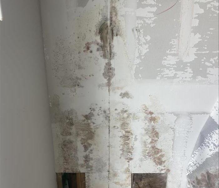 white wall with microbial growth on it